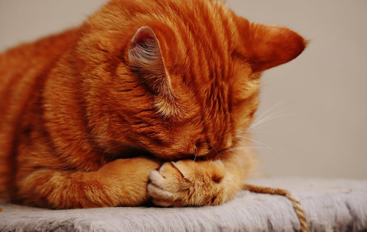 Der Geruchsentferner bei Haustieren